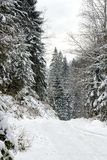 Winter coniferous snowy forest in the afternoon. Vertical frame.  stock images