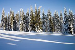 Winter conifers. Winter landscape with a conifers Royalty Free Stock Photography