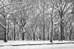 Winter Contrast Stock Images