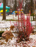 Winter contrast Royalty Free Stock Images