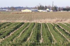 Winter Corn Acreage in Washington State Royalty Free Stock Photos