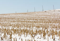 Winter corn field Stock Photos