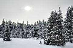 Winter country Royalty Free Stock Image