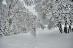Winter country Royalty Free Stock Photos