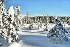 Winter country Royalty Free Stock Photo