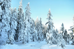 Winter country Stock Image