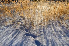 Winter Country Colors-4 Royalty Free Stock Images