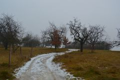 Winter country with gloomy trees. Hibernal land with dark trees and snowy road with wooden masts on the edges and cloudy background Stock Photography
