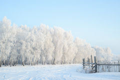 Winter country landscape at early morning. Forest Stock Image