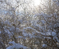 Winter country landscape, vegetation covered by snow Royalty Free Stock Image