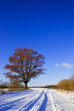 Winter country road. Country road with snow and oak tree with leafs Stock Image