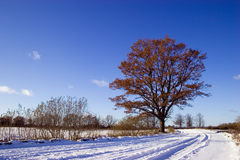 Winter country road Royalty Free Stock Photo