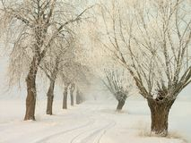 Winter country road with frozen trees at sunrise. Snowy country road crossing frozen trees and snowy ground in the rising of the sun. Shot in the middle of Royalty Free Stock Photo