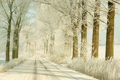 Winter country road with snowy trees Stock Images