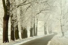 Winter country road with snowy trees. Rural road between white trees in the middle of winter. Frost covers the branches of tree Stock Photography