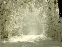 Winter country road with snowy trees Royalty Free Stock Photos