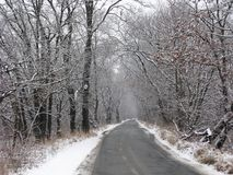 Winter country road Stock Photography