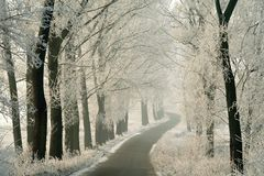 Winter Country Road With Frost Covered Trees Stock Image
