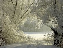 Winter Country Road With Frosted Trees Royalty Free Stock Image