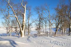 Winter In The Country Royalty Free Stock Images