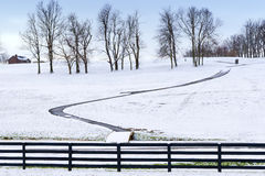 Winter country scene with trees and a path. Royalty Free Stock Photo