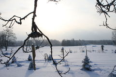 Winter at country site Royalty Free Stock Image