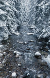 Winter country, Slovakia. River in forest - winter country, Slovakia royalty free stock photos
