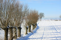 Winter in the countryside. A picture of a snow-covered countryside area. A clearing with some tracks in the snow is lined with some short trees which have lost Stock Photos