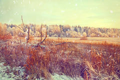 Winter countryside, with dry grass field, a forest Royalty Free Stock Photos