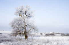 Winter countryside. Winter landscape of Russian countryside Royalty Free Stock Photos