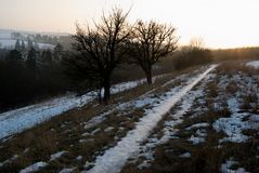 Winter countryside panorama wit tree silhouette in sunset Royalty Free Stock Images