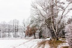Winter countryside road. In central Europe Royalty Free Stock Images