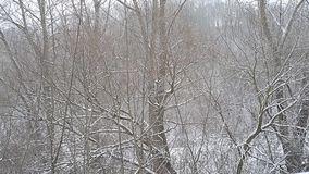 Winter countryside trees. In snow stock video