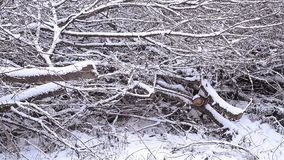 Winter countryside trees. In snow stock footage