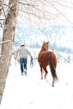 Winter cowboy Stock Photography