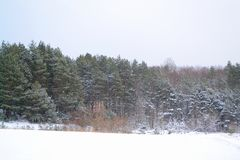 Winter cozy background. Forest idyll. Snow-white nature royalty free stock photography