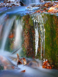 Winter creek. With icicles and autumn leaves Royalty Free Stock Photos