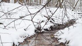 Winter creek, slider stock footage