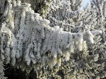 Winter in Croatian countryside,details,3 Stock Photography