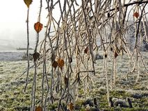 Winter in Croatian countryside,details,2 Stock Photo