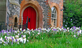 Winter crocuses and castle Royalty Free Stock Images