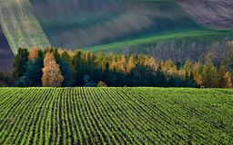 Winter crops in the backdrop of autumn bush and hills.South Moravia.Czech republic. stock images