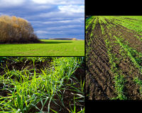 Winter crops collage Stock Photography