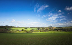 Winter Crops in Field. UK Royalty Free Stock Image