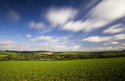 Winter Crops in Field. UK Royalty Free Stock Photo