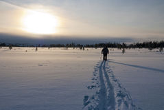 Winter Cross Country Skiing Royalty Free Stock Photography
