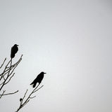 Winter Crows. Two crows on the brench of a tree in winter royalty free stock photography