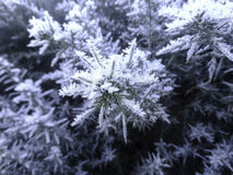 Winter Crystals Royalty Free Stock Images