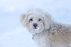 Winter cute dog portrait Royalty Free Stock Photo