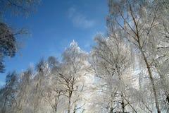 Winter in Dänemark stockfoto